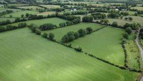 GALLERY| Huge interest in 83-acre Longford farm up for auction