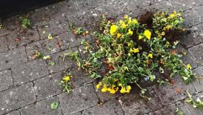 Outrage as flower display vandalised overnight in Longford