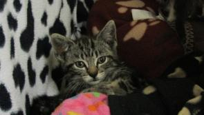GALLERY | ISPCA National Centre in Longford appeals for new homes for 68 cats and kittens in their care