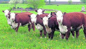 Longford Leader Farming: Farmers should sell hard as Christmas demand pushes price upwards
