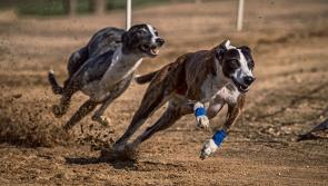 Longford Greyhound Stadium closes its doors this month