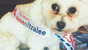 'Ruff' competition for Longford pooch in the race for the Nose of Tralee crown