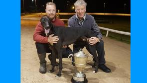 Zaconey Hulk sprints to €5,000 derby glory at Longford Greyhound Stadium