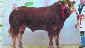 Longford breeder comes out on top at Limousin society show & sale