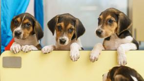 Dogs Trust 'press paws' on adoptions over the Christmas period