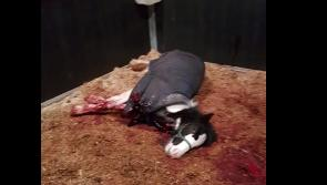 Longford charity Hungry Horse Outside devastated following vicious stabbing of foal