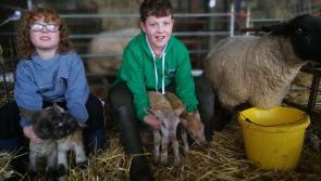 Quad lambs born on Lanesboro farm