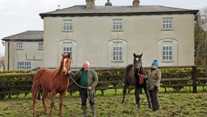 Cheltenham winner has Longford links