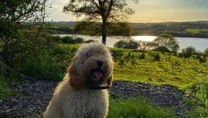 GALLERY 12 | A selection of your Love Your Home photography competition images