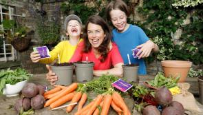 Energia to give away 1,000 home GROWBoxes worth €45,000 to help Get Longford Growing