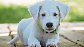 """Don't post photos of pets on social media"" - Garda warning on dog thefts"
