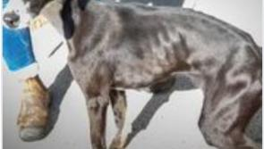 'Terrified'dog found locked in a crate rescued by ISPCA