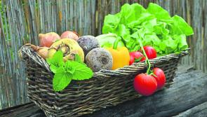 Ireland  envisioned as 'world leader' in Sustainable Food Systems within the next ten years