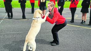 Longford charity Cian's Kennels reaches €5,000 fundraising target in five days