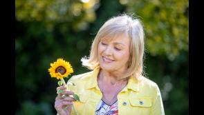 Still time to dedicate a virtual sunflower in memory of a loved one and support Longford Hospice Homecare
