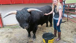 Knights & Cowquests as Granard heritage centre officials visit famed highland cattle farm