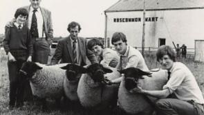 Moatfarrell flock is the oldest in Suffolk Sheep Breeders Club