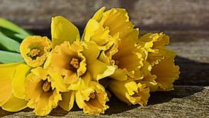 Longford Daffodil Day street collections cancelled by Irish Cancer Society over threat of coronavirus