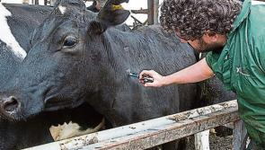 Longford Leader Farming: Groups welcome positive first steps from TB Forum meeting
