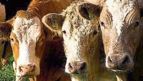 Longford Leader Farming: BEAM – 'What do I have to do'?