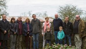 The Edgeworthia Chrysantha in home soil