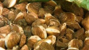 Public meeting to discuss Lanesboro Asian clam crisis
