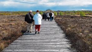 Bord Na Mona to develop Corlea Community Wetland