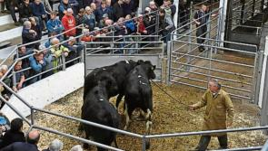Calls for Farm Assistance programme for Longford farmers