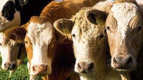 Longford Leader Farming: Export trade to Northern Ireland to continue