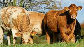 Beef farmers voice dissatisfaction at deal