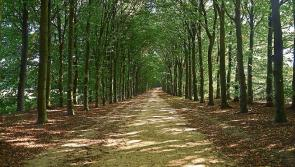 Longford Leader Farming: All you need to know about forestry