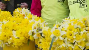 Appeal for Longford people to support Daffodil Day