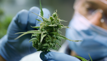 Medical cannabis plan to be discussed at Leinster House tomorrow