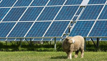Solar farm to be constructed near Killashee