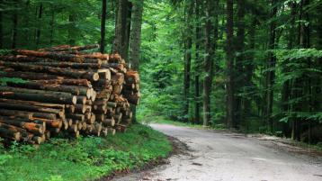 Ministers meet with IFA over forestry licences
