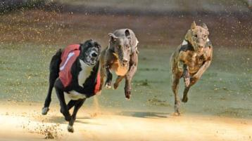 Letter to the Editor: Cessation of the promotion of the greyhound industry is welcome news