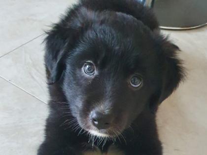 Six new-born puppies abandoned in a cardboard box in Granard