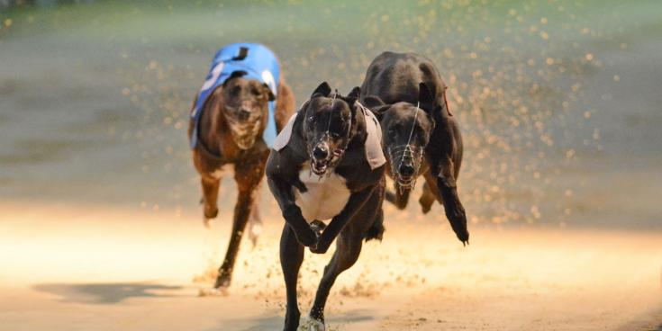 Greyhound industry decline cannot be pinned on Covid