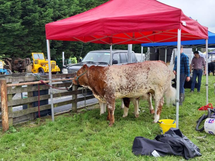 GALLERY| Excitement surrounds day one of the Granard Agri show
