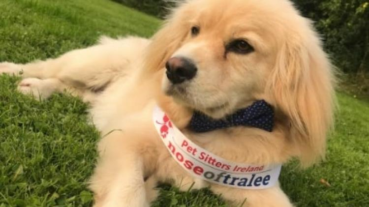Can your pet be the next 'Nose of Tralee'? Longford entries wanted