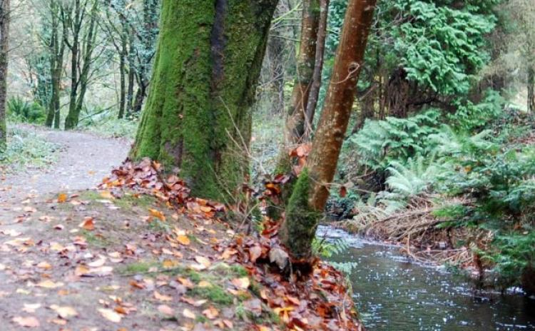 Top 12 quieter walks in Longford to enjoy during Covid-19 crisis